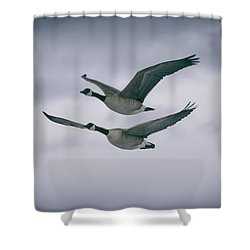 Canadian Geese In Flight Shower Curtain by Jason Coward