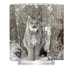 Canadian Wilderness Lynx Shower Curtain