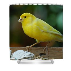 Shower Curtain featuring the photograph Canary Domesticated by Ramona Whiteaker