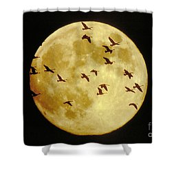Canda Geese And Moon Shower Curtain by Kenneth Fink and Photo Researchers