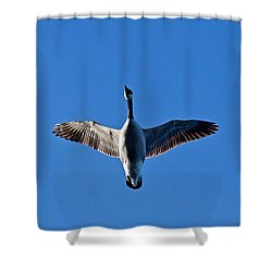 Shower Curtain featuring the photograph Candian Goose In Flight 1648 by Michael Peychich