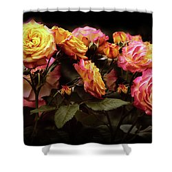 Candlelight Rose  Shower Curtain by Jessica Jenney