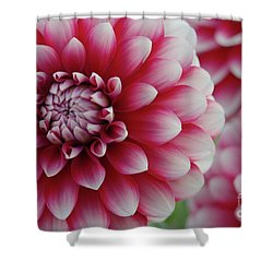 Candy Cane Dahlias Shower Curtain by Patricia Strand