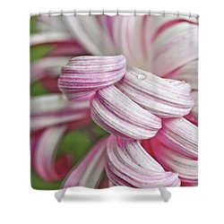Candy Cane Petals Shower Curtain