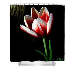 Candy Cane Tulip Shower Curtain
