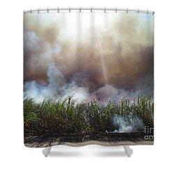 Cane Corona II Shower Curtain by Alexander Van Berg