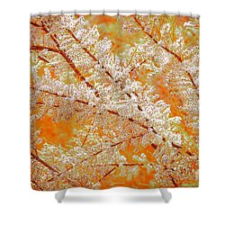 Shower Curtain featuring the photograph Canela En Rama by Alfonso Garcia