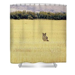 Canidae Shower Curtain