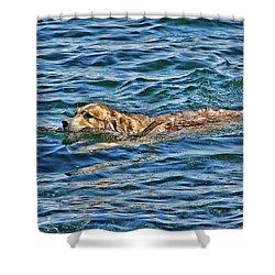 Shower Curtain featuring the photograph Canine Joie De Vivre by Rhonda McDougall