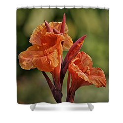 Canna Lily 2945_3 Shower Curtain