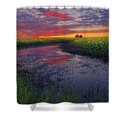 Canola At Dawn Shower Curtain