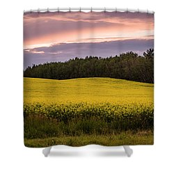 Shower Curtain featuring the photograph Canola Crop Sunset by Darcy Michaelchuk