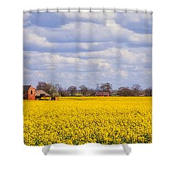 Canola Field Shower Curtain by John Edwards