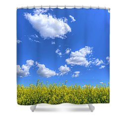 Canola Skies Shower Curtain by Spencer McDonald