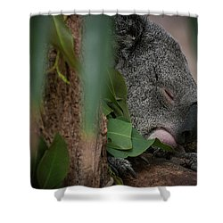 Canopy Nap Shower Curtain