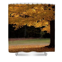 Canopy Of Autumn Gold Shower Curtain