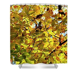 Shower Curtain featuring the photograph Canopy Of Autumn Leaves  by Angie Tirado