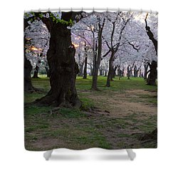 Canopy Of Pink 8x10 Shower Curtain