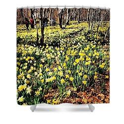 Daffodil Field  Shower Curtain