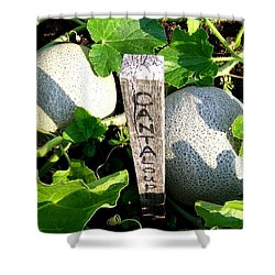 Cantaloupe Shower Curtain by Will Borden