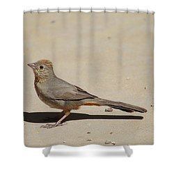 Canyon Towhee Begs Shower Curtain