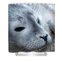 Cape Ann Seal Shower Curtain