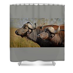 Cape Buffalo And Their Housekeeper Shower Curtain
