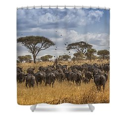 Cape Buffalo Herd Shower Curtain