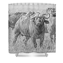 Cape Buffalos In Serengeti Shower Curtain by Pravine Chester