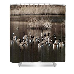 Cape Cod Americana Canada Geese Shower Curtain by Constantine Gregory