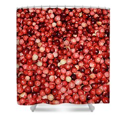 Cape Cod Cranberries Shower Curtain