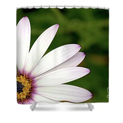 Cape Daisy Shower Curtain by Baggieoldboy