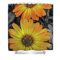 Cape Daisy's - Orange Shower Curtain