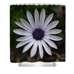 Cape Daisy Shower Curtain