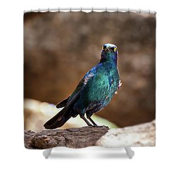 Cape Glossy Starling Shower Curtain by Jane Rix