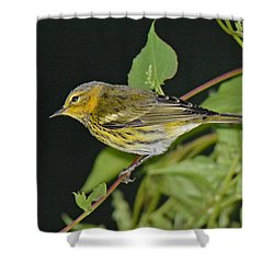 Cape May Warbler Shower Curtain