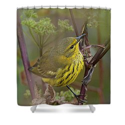 Cape May Warbler In Wees Shower Curtain
