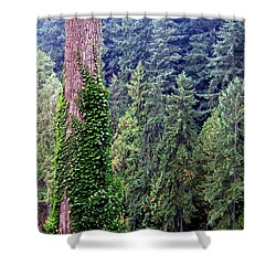 Capilano Canyon Ivy Shower Curtain by Will Borden