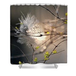 Captured Small Feather_02 Shower Curtain