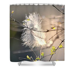 Captured Small Feather_03 Shower Curtain
