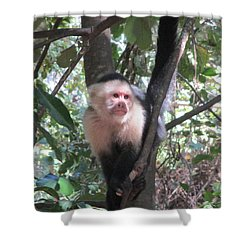 Capuchin Monkey 4 Shower Curtain by Randall Weidner