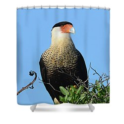 Caracara Portrait Shower Curtain by Debra Martz