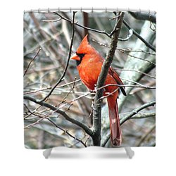 Cardinal 2 Shower Curtain by George Jones
