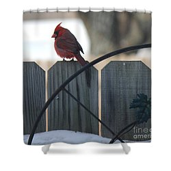 Cardinal 2 Shower Curtain