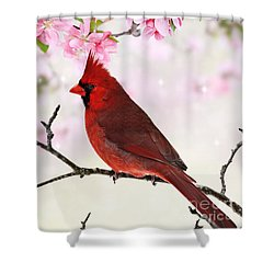 Cardinal Amid Spring Tree Blossoms Shower Curtain