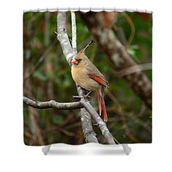 Shower Curtain featuring the photograph Cardinal by Cathy Harper