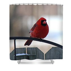 Cardinal Closeup Shower Curtain