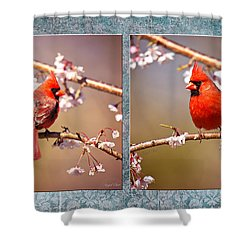 Shower Curtain featuring the photograph Cardinal Collage by Angel Cher