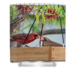 Cardinal Feeding  Shower Curtain