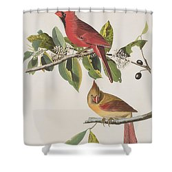 Cardinal Grosbeak Shower Curtain by John James Audubon